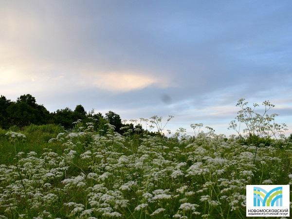 Природа в деревне Кончеево